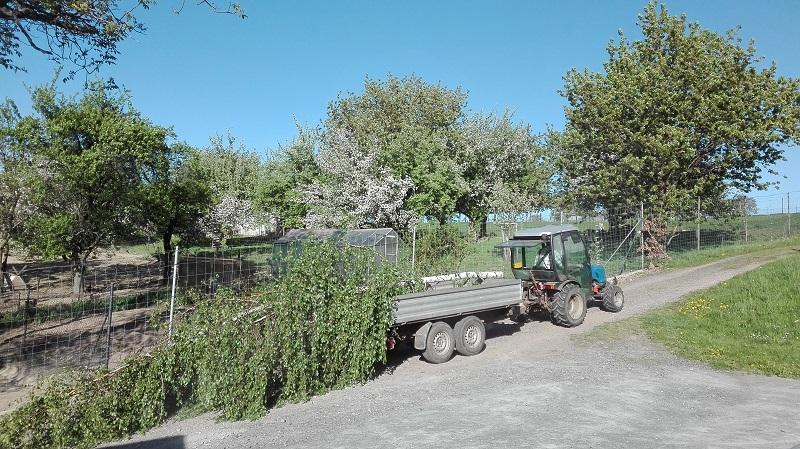 der Maibaum wird gebracht